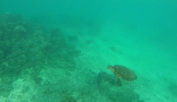 fundo do mar copy