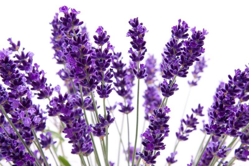 Sony-Lavende