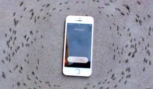 iphoneformigas
