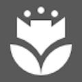 Contagem de pólen - Google App